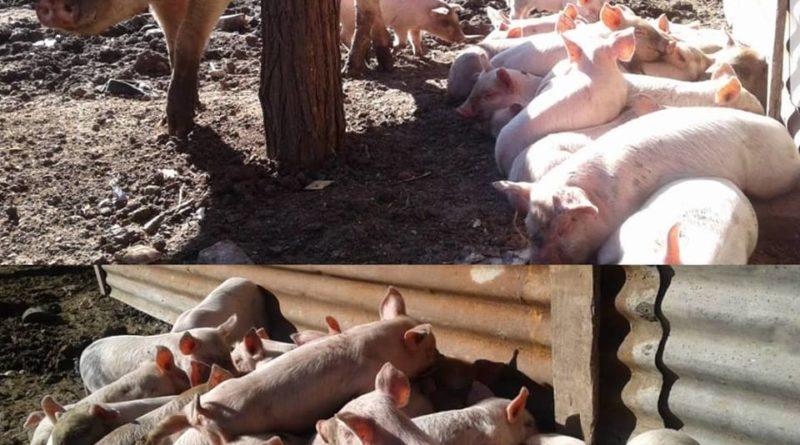 Visita a los productores rurales de Almirante Brown